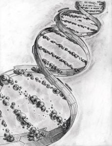 dna strand charcoal drawing