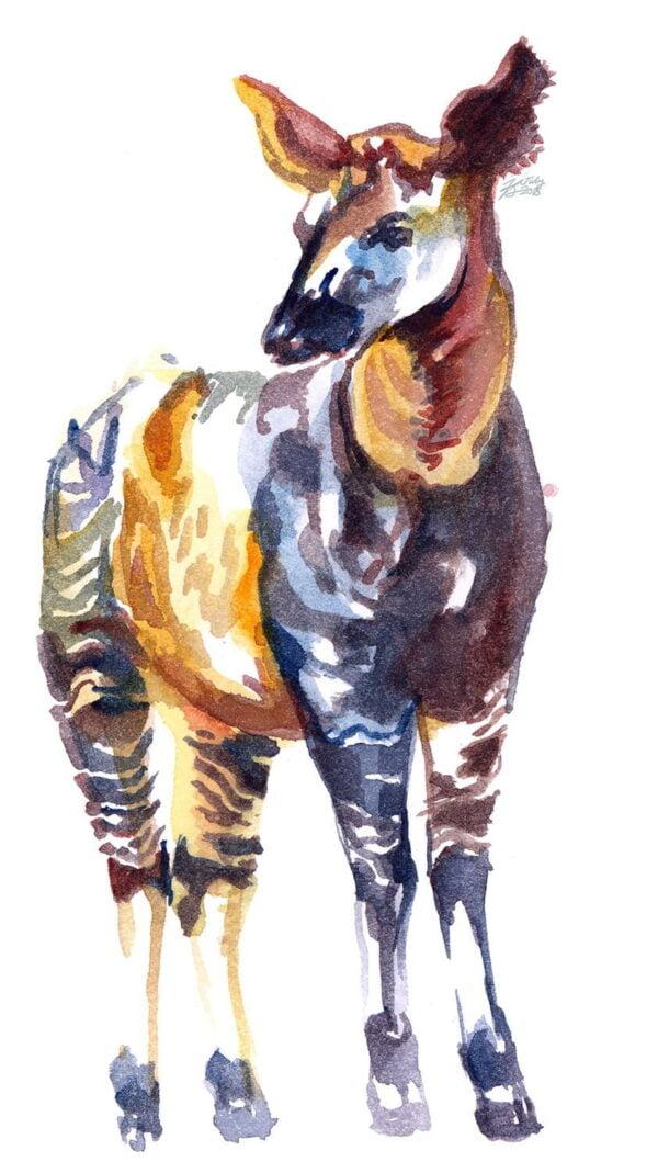 okapi watercolor sketch art print gilcee