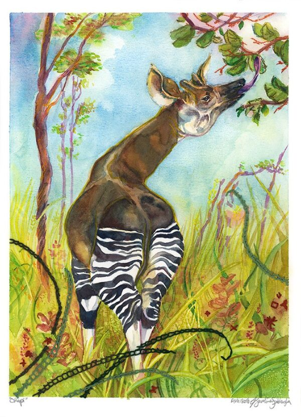 giraffe okapi watercolor mixed mediums