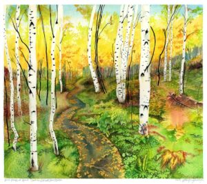 Birch Forest at Grands-Jardins National Park Quebec watercolor painting