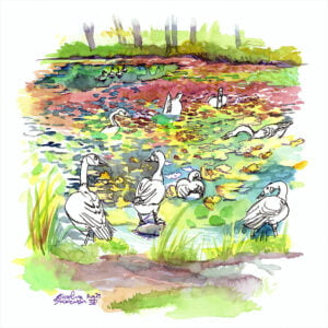 Canada Geese at Botanical Garden urban sketch watercolor painting by karolina szablewska